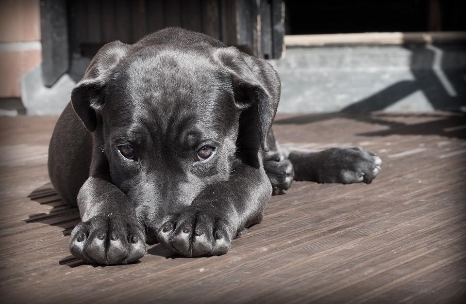 Los primeros días del cachorro en casa