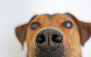 La alfombra olfativa para perros es un juego de olfato y estimulación ambiental para nuestros colegas peludos