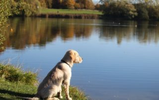La importancia de la paciencia con los perros