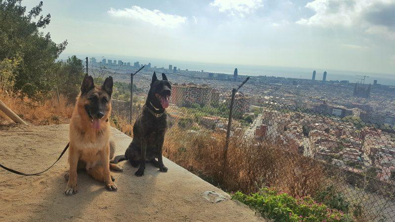 estados-de-calma-perros