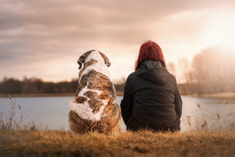 perro-señales-de-calma