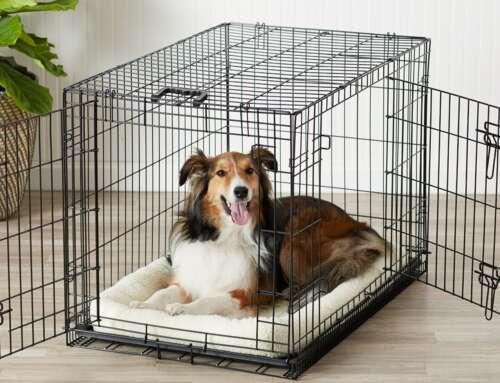 Cómo acostumbrar a tu perro al transportín