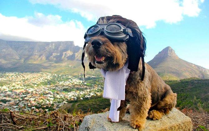 oscar-perro-viajero