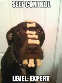 autocontrol-perros