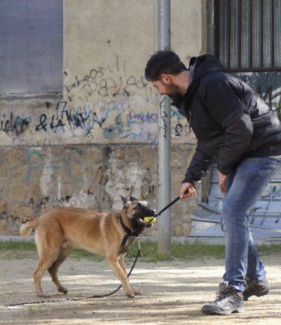 juego-instinto-de-caza-perros