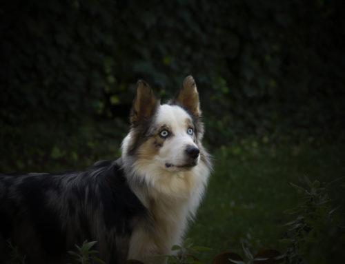 Ejercicios para hacerle fotos a tu perro