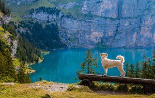 Propiocepción para perros, beneficios y ejercicios