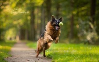 Cómo hacer fotos a tu perro con facilidad