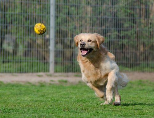 Los juguetes más guays para tu perro