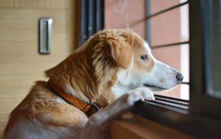 perro mirando por la ventana ansiedad por separación
