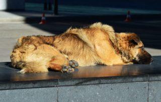 Perro descansando - Vuelta a la normalidad
