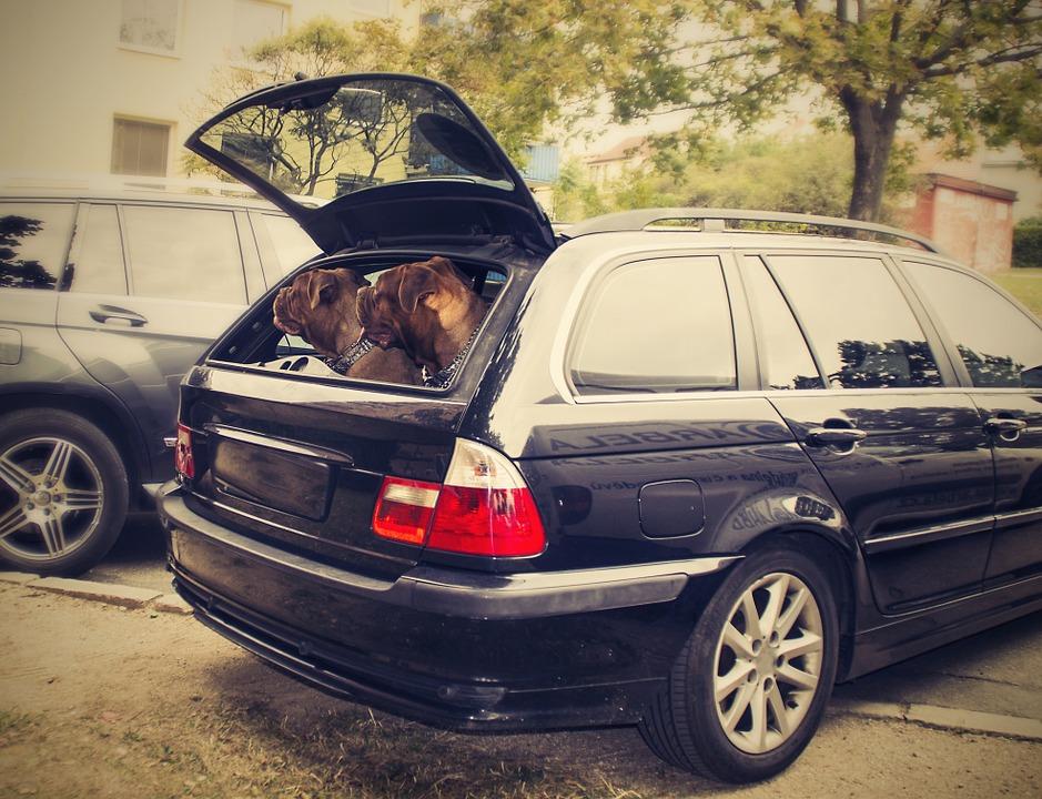 Dos perros en el maletero de un coche- Consejos básicos para propietarios de perros