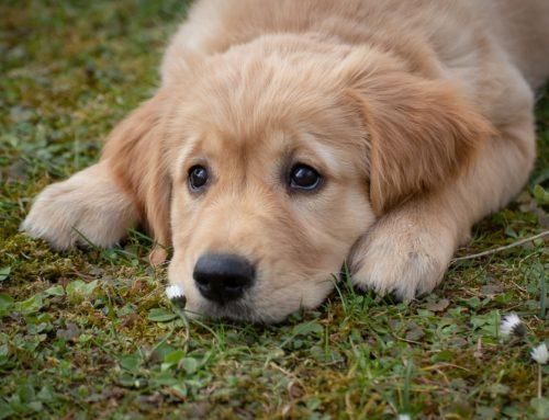 ¿Por qué los perros comen hierba?