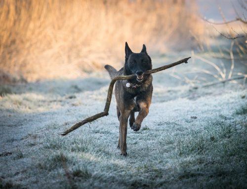 Entorno: ¿cómo y dónde debe vivir un perro?