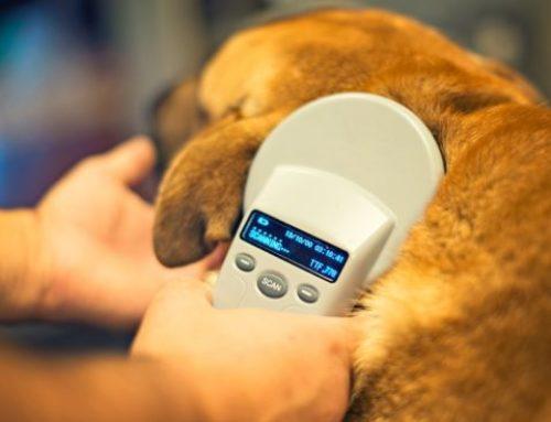 Identificación de tu perro y buenas practicas