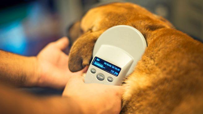 Microchip - Identificación de tu perro y buenas practicas