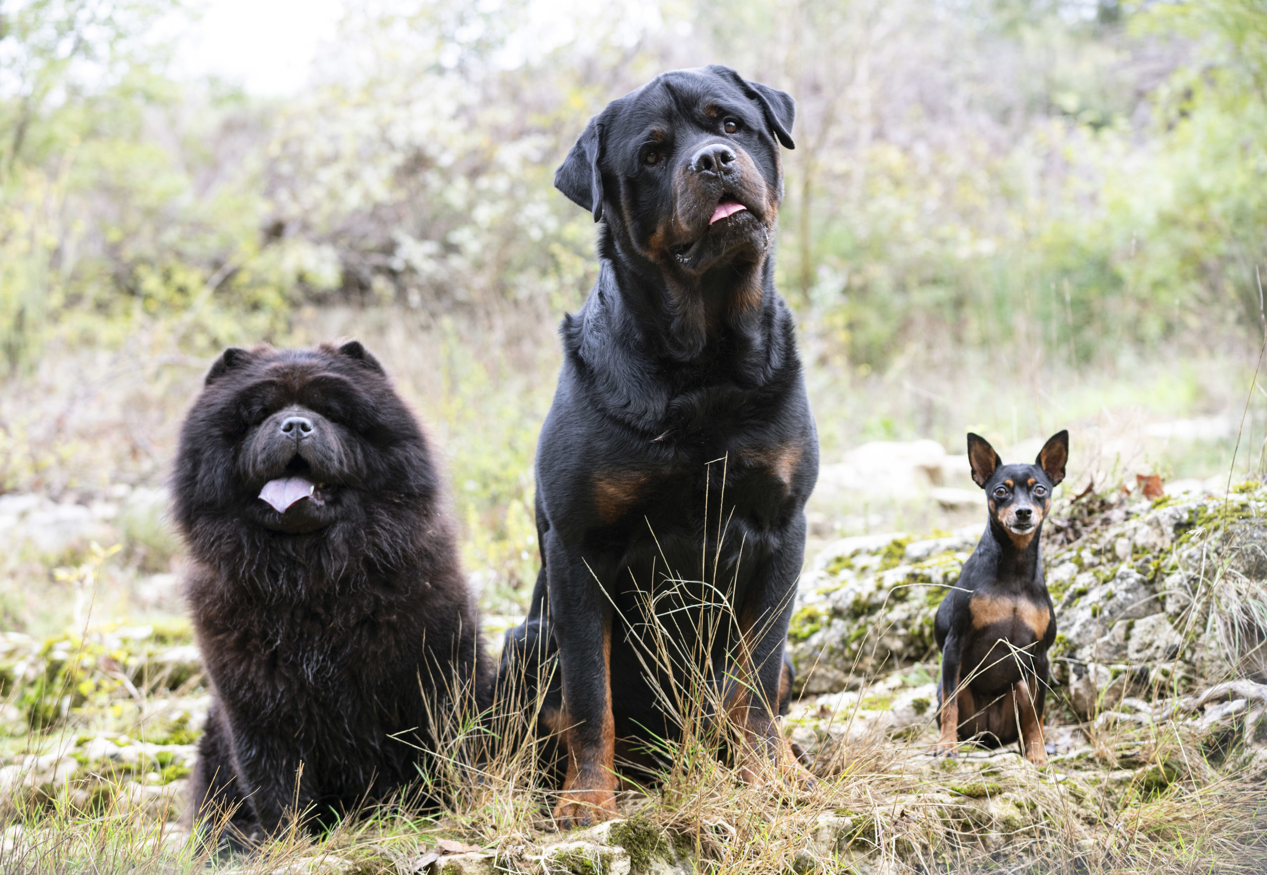 Obediencia en grupo
