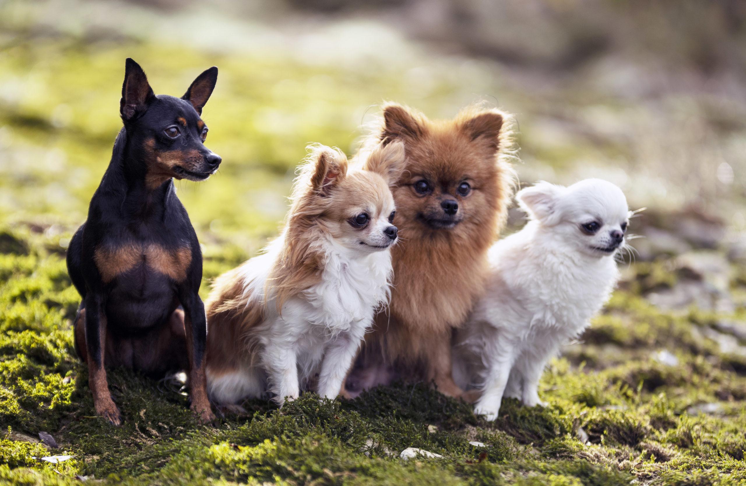 Clases de obediencia canina en grupo