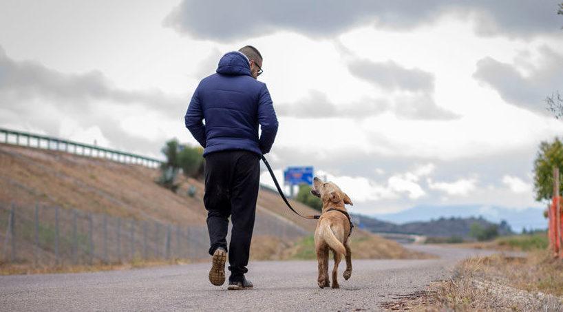 Paseo relajado con perro