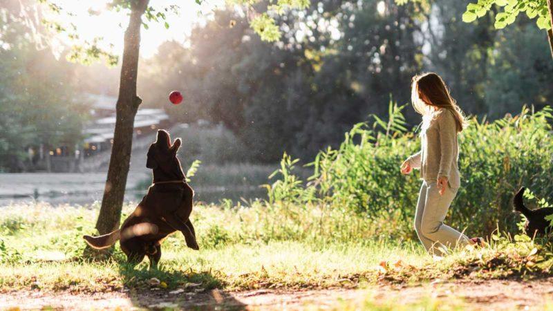 jugar con tu perro en verano