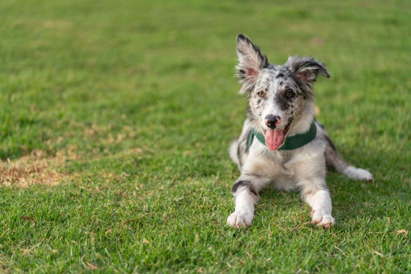Perro en el parque jadeando