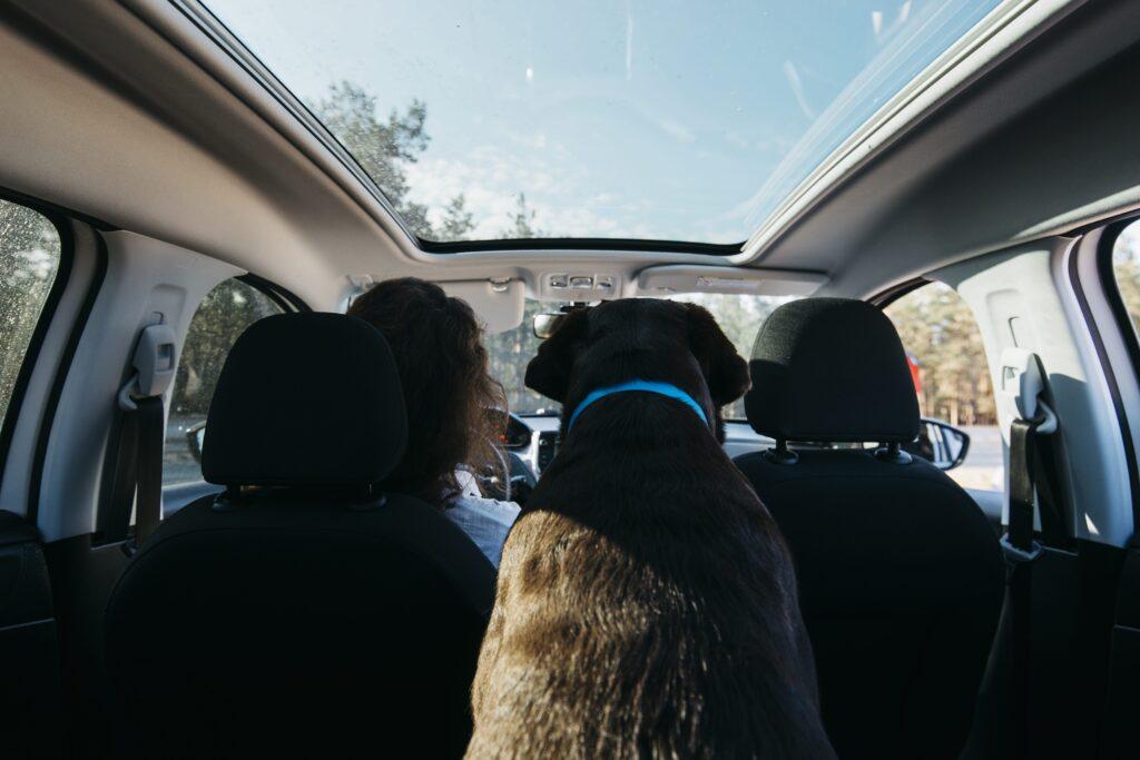 Transporte perros verano