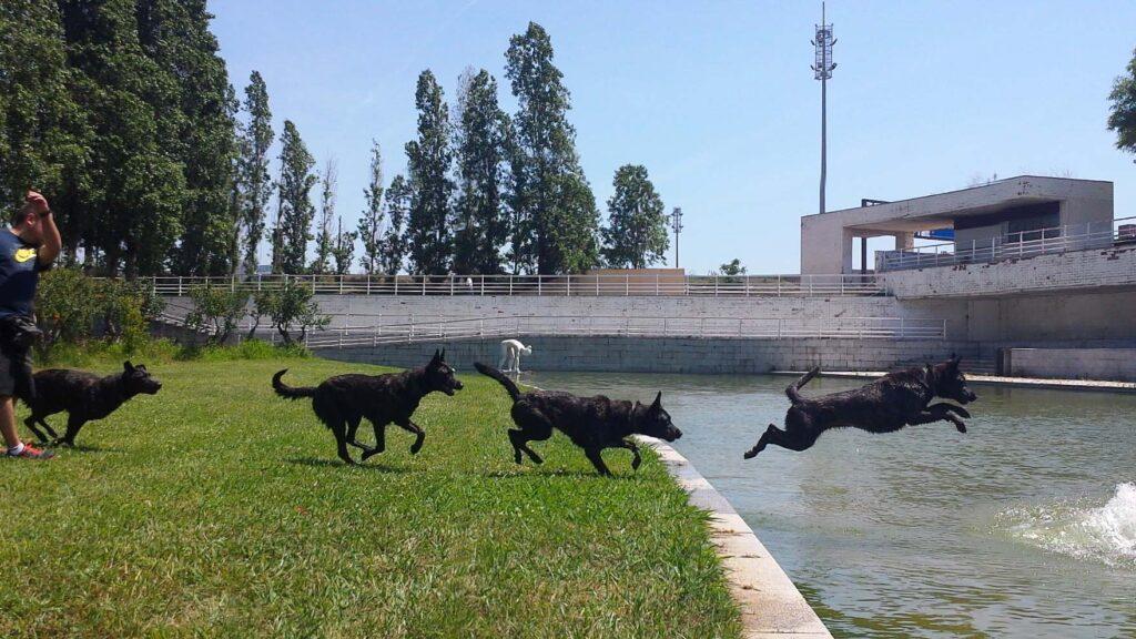 Antonio kira Landing Tandem Dogs