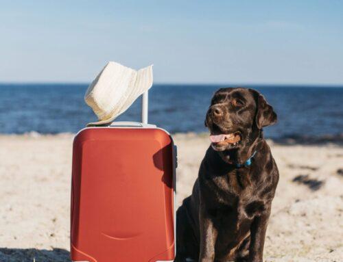 5 recomendaciones para cuidar a tu perro en verano
