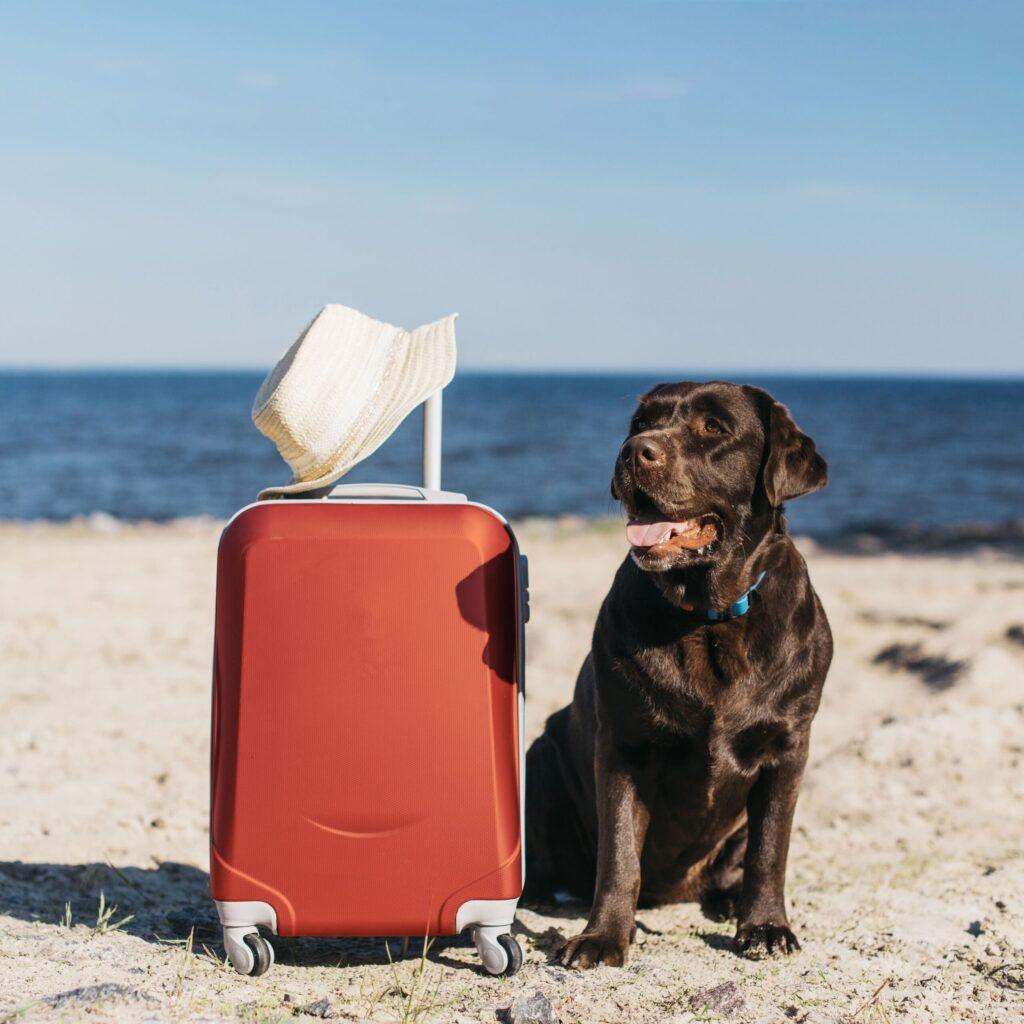 tips para cuidar a tu perro en verano