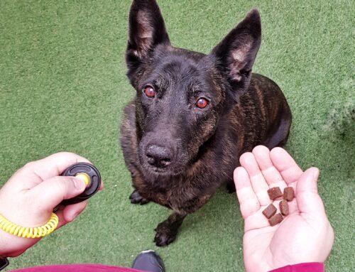¿Qué es el clicker para perros y cómo utilizarlo?